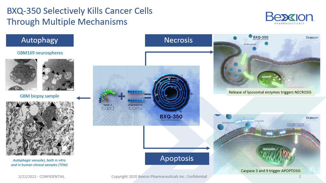 BXQ-350 selectively kills cancer cells through multiple mechanisms