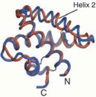 Sphingolipid activator protein, SapC
